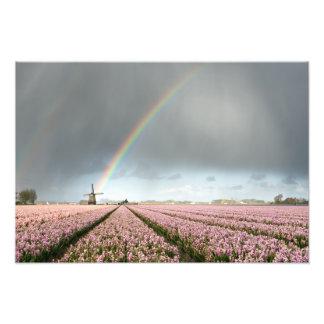 Regenbogen über Hyazinthen und eine Windmühle in Fotodruck
