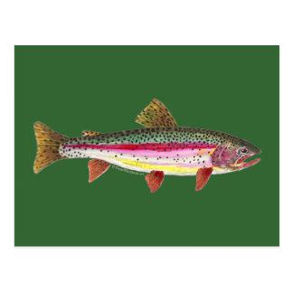 Regenbogenforelle-Fische Postkarte
