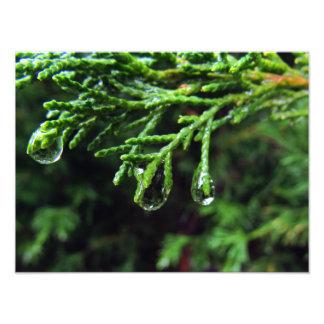 Regentropfen auf einem Baumast (#2) Fotodruck