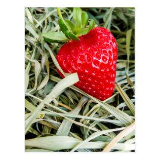 reife Erdbeere Postkarte