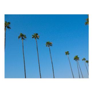 Reihe der Palmen Postkarte