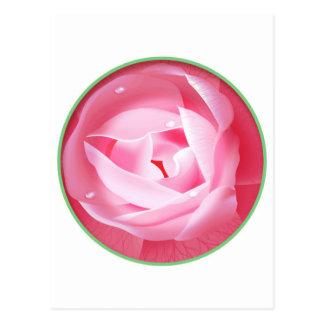 Reizende rosa Rose Postkarte