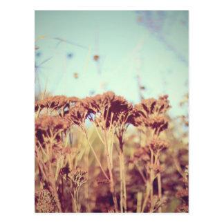 Retro Pflanzen Postkarten