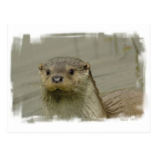 Riesige Fluss-Otter-Postkarte Postkarte