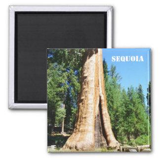 Riesiger Mammutbaum-Magnet! Quadratischer Magnet