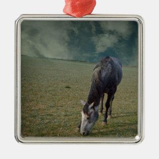 Roan Pferd, das in der Koppel weiden lässt Quadratisches Silberfarbenes Ornament
