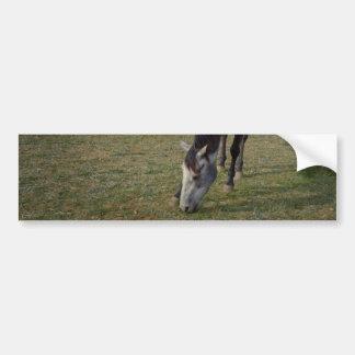Roan Pferd, das in einer Koppel weiden lässt, Autoaufkleber