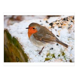 Robin auf einem schneebedeckten Klotz Postkarte