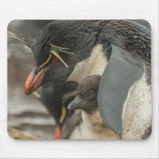 Rockhopper Pinguin und Küken Mousepads