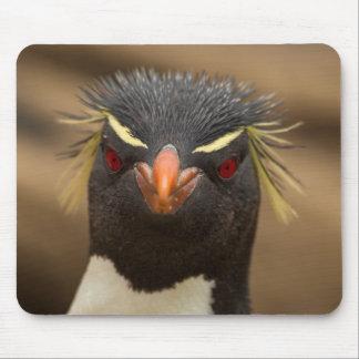 Rockhopper Pinguinporträt Mauspad