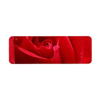 Romantische Rote Rose