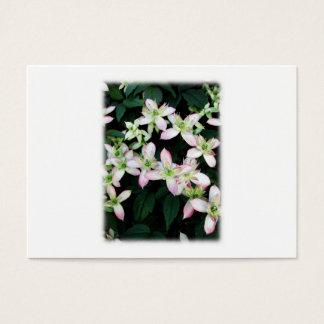 Rosa Blumen. Clematis. Auf Weiß Jumbo-Visitenkarten