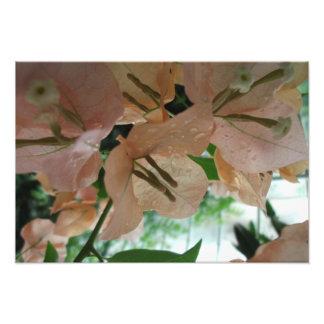 Rosa Blumen Up nahes Photographie