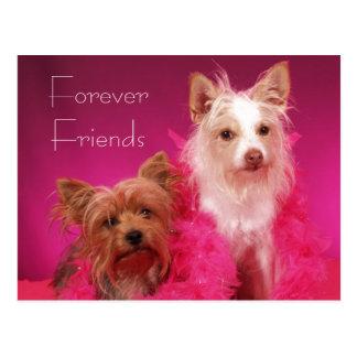 Rosa-für immer Freund-Freundschaft Postkarte