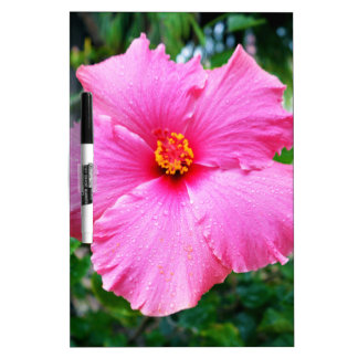 Rosa Hibiskus-Blumen-Regen besprüht, Trockenlöschtafel