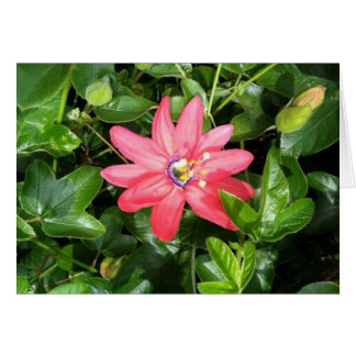Rosa Leidenschafts-Blume Karte