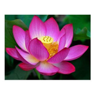 Rosa lila Lotos-Blumen-Raum-Blumenpostkarte Postkarte