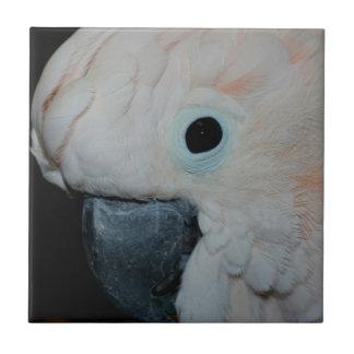 Rosa Moluccan Cockatoo-Papageien-Tier Kleine Quadratische Fliese