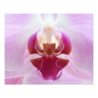 Rosa Orchideen-Makro Photo