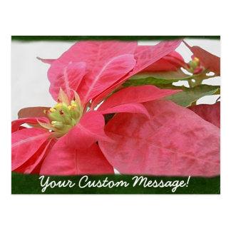 Rosa Poinsettias 1 Postkarte