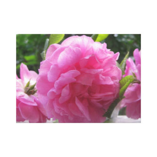 Rosa Vintage Rosen Galerie Gefaltete Leinwand