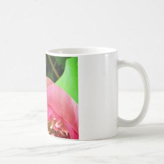 Rosa Wasser-Lilie Lotus Tasse