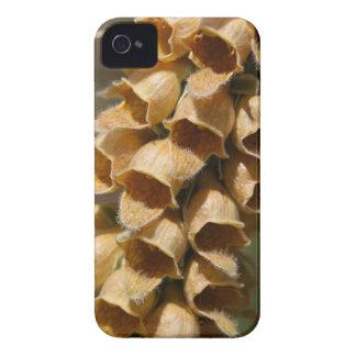 Rostige Fingerhut (Fingerhut ferruginea) iPhone 4 Hüllen