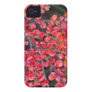 Rot-Blätter in der Natur iPhone 4 Case-Mate Hülle