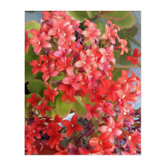 Rote Blumen Acryl Wandkunst