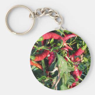 Rote Chili-Paprikaschoten, die an der Pflanze Schlüsselanhänger