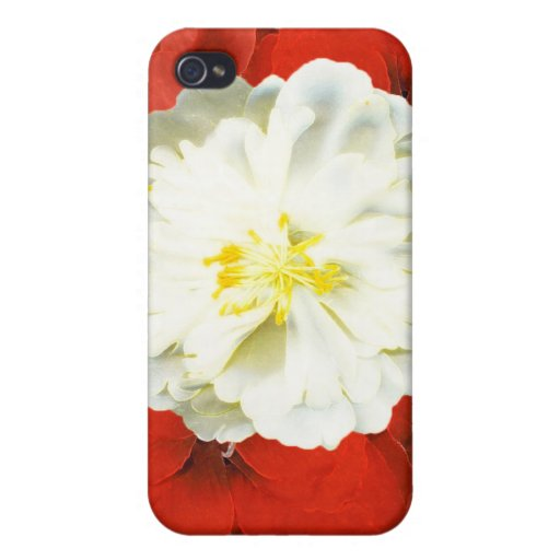 Rote Eleganz iPhone 4/4S Cover