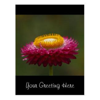 Rote ewig Blume Postkarte