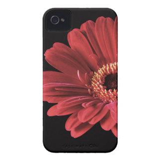 Rote Gerbera-Blume Case-Mate iPhone 4 Hülle