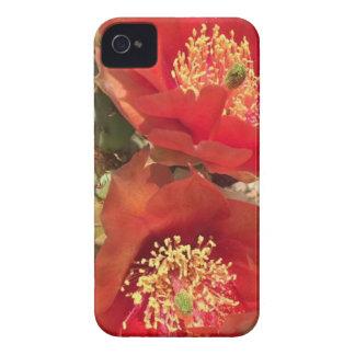 Rote Kaktus-Blume Case-Mate iPhone 4 Hülle