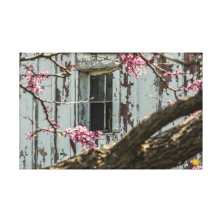 Rote Knospe, die ein Scheunen-Fenster gestaltet Leinwanddruck