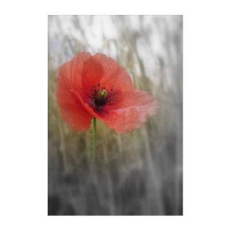 Rote Mohnblumen-Blumen-böhmische Acrylwand-Kunst Acryldruck
