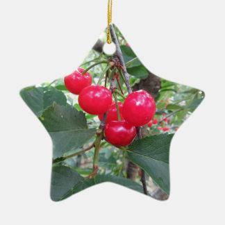 Rote Montmorency-Kirschen auf Baum im Kirschgarten Keramik Stern-Ornament