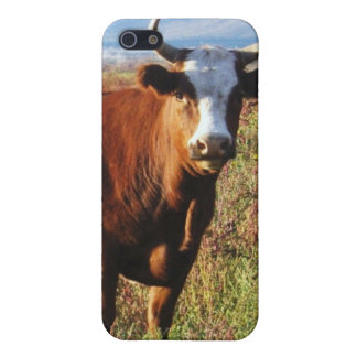 Rote Mutter Cow in den Wildblumen iPhone 5 Case