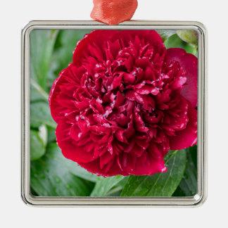 Rote Pfingstrosen-Blume Silbernes Ornament