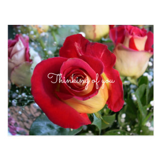 Rote Rose, die an Sie kundenspezifische Mitteilung Postkarte