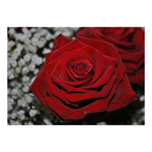 Rote Rose - Druck Poster