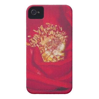 Rote Rose iPhone 4 Etuis