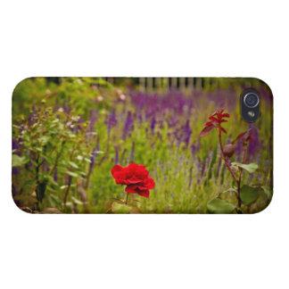 Rote Rose iPhone 4 Etui