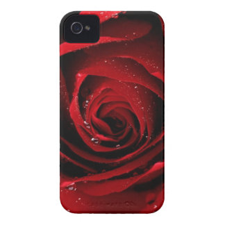 Rote Rose kaum dort iphone 4 Fall iPhone 4 Cover