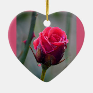 Rote Rose mit Wassertropf,Nahaufnahmeim Garten Keramik Ornament