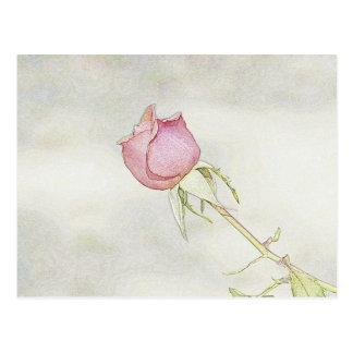 Rote Rose Postkarte