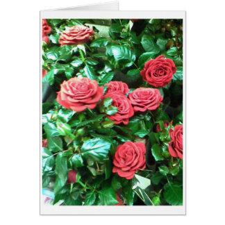 Rote Rosen Karte