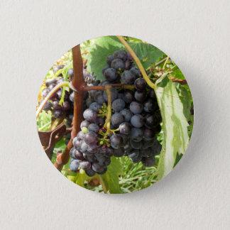 Rote Trauben in einem Weinberg Runder Button 5,7 Cm