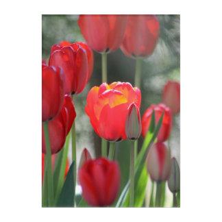 Rote Tulpe-Acrylwand-Kunst Acryldruck