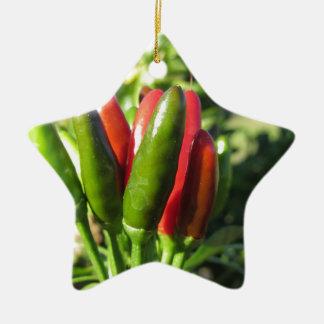 Rote und grüne Paprikaschoten, die an der Pflanze Keramik Stern-Ornament
